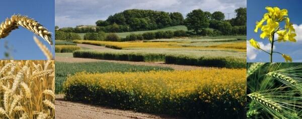 Abt. Acker- und Pflanzenbau